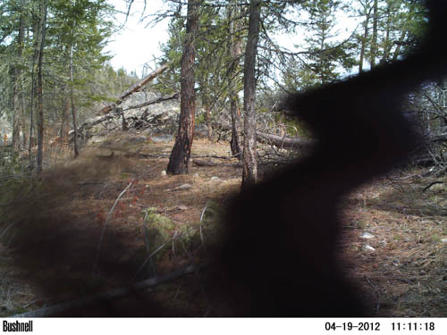 Bear eating cam 3
