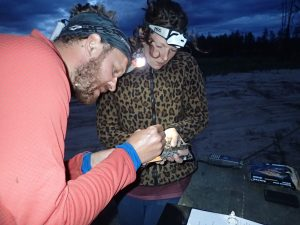 Elly Knight and Matt Timpf attaching a miniature radio transmitter to the tail of a male Common Nighthawk. Photo: Azim Shariff